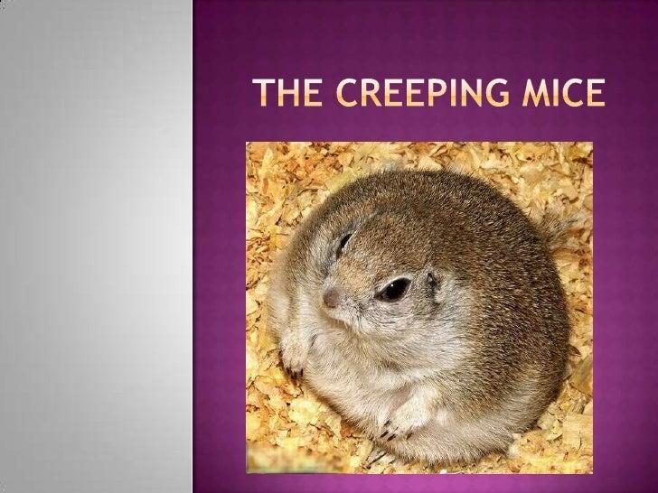 The Creeping Mice <br />