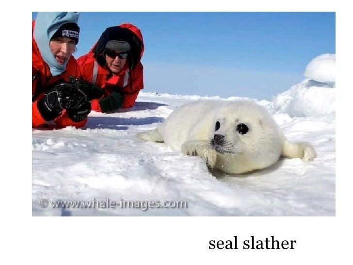 seal slather