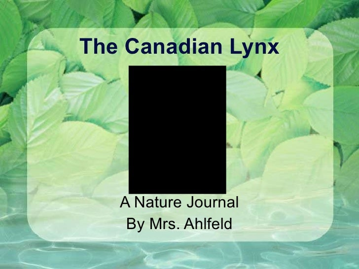 The Canadian Lynx A Nature Journal By Mrs. Ahlfeld