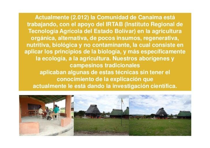 Actualmente (2.012) la Comunidad de Canaima está trabajando, con el apoyo del IRTAB (Instituto Regional de  Tecnología Agr...