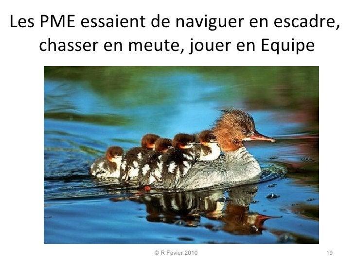 Les PME essaient de naviguer en escadre,  chasser en meute, jouer en Equipe © R Favier 2010