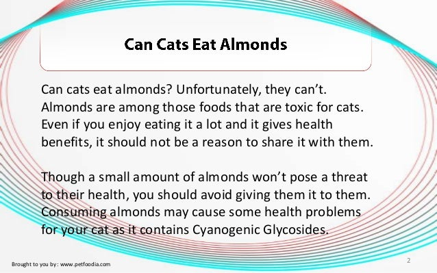 Can A Cat Eat Almonds