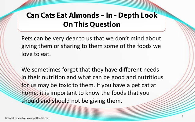 Can Cats Eat Almonds