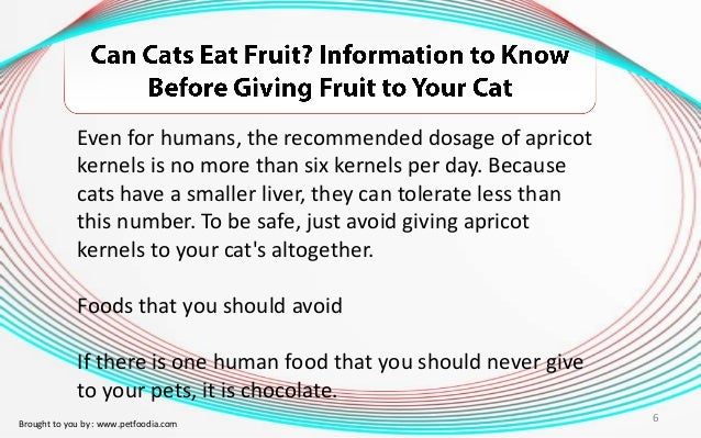 Can One Cure Cats With Liver Cancer