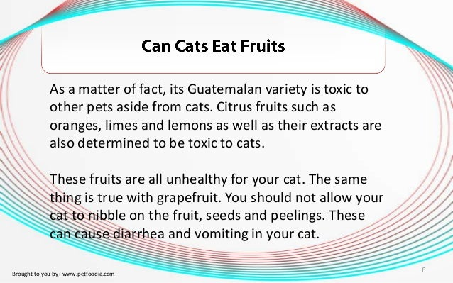 Can Cats Eat Limes