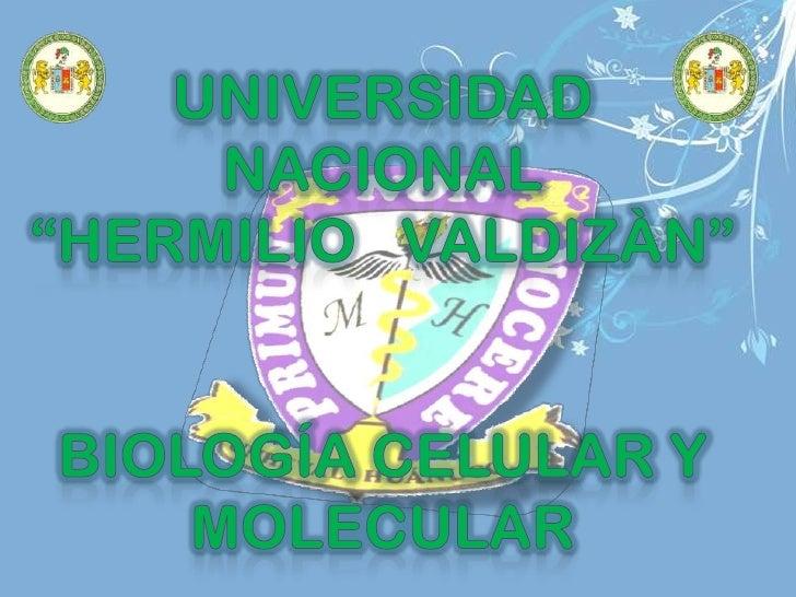 """UNIVERSIDAD   NACIONAL                    """"HERMILIO   VALDIZÀN""""<br />Biología celular y molecular <br />"""