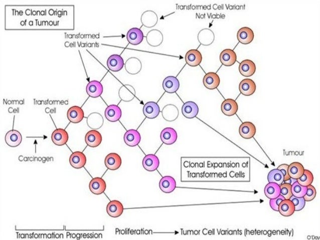Cause of MelanomaAll cancers are caused by damage to theDNA inside cells. This damage can be inherited inthe form of genet...