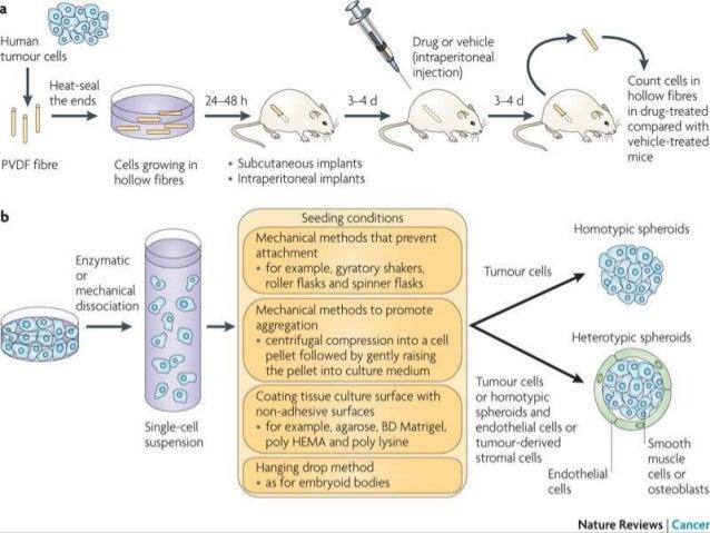 Anti-Cancer Drug Screening in Vitro Essay Paper