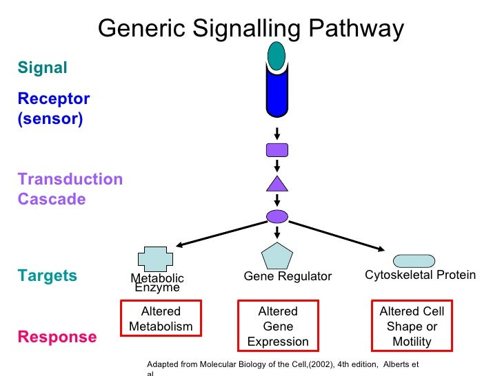 Cancer signal transduction ccuart Image collections