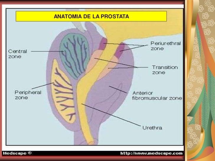 Dorable Anatomía Y Fisiología Del Cáncer De Próstata Colección ...