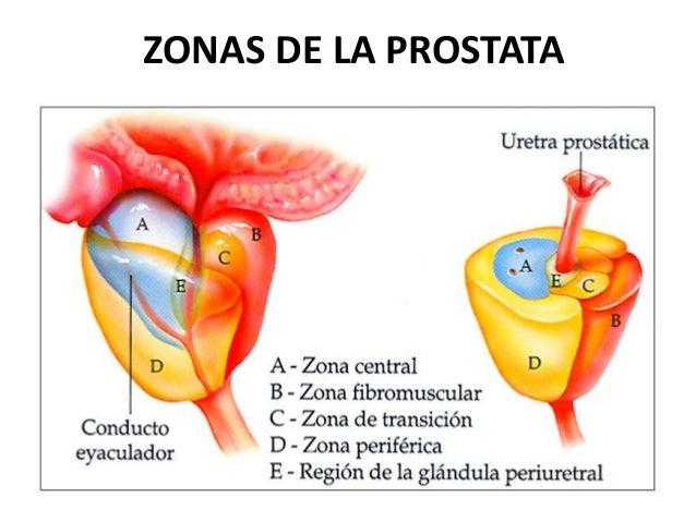 cancer de prostata anatomia y fisiologia