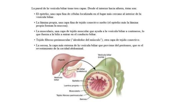 Cancer de vesicula biliar y vias biliares