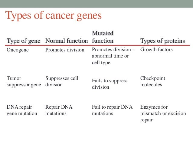 cell division cancer essay