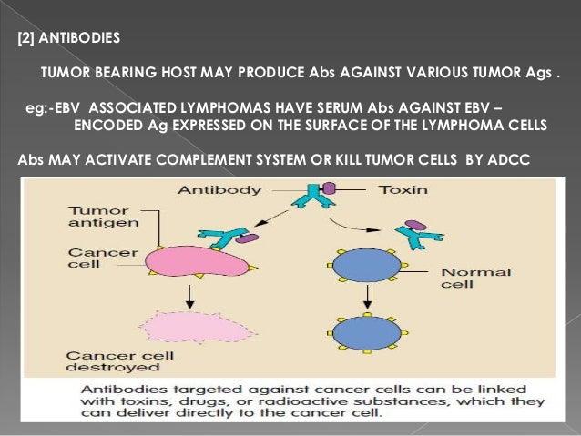 Activated macrophages secrete lytic enzymesAlso secrete TNF-  tumour necrosisSecrete nitric oxide (potential antitumo...