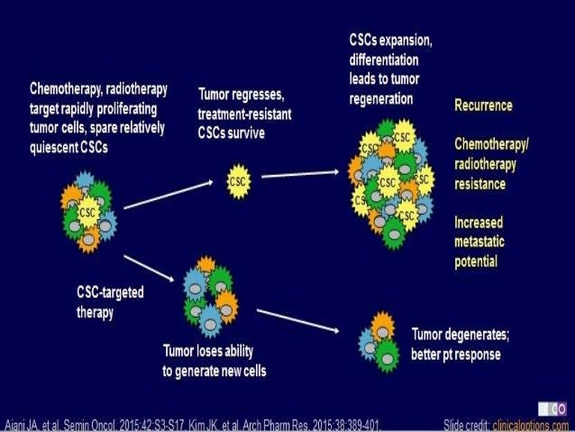 Implications of Cancer Stem Cell Theory for Cancer Chemoprevention by Natural Dietary Compounds