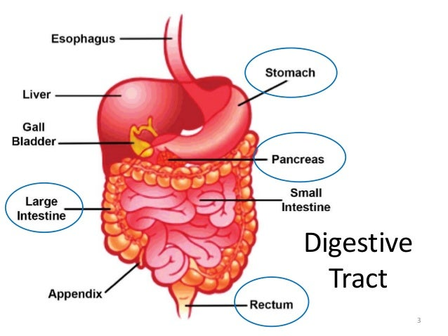 gi tract symptoms essay Peptic ulcers - causes, symptoms and treatments essays related to peptic ulcers - causes, symptoms and the psychophysiologic gastrointestinal reaction.
