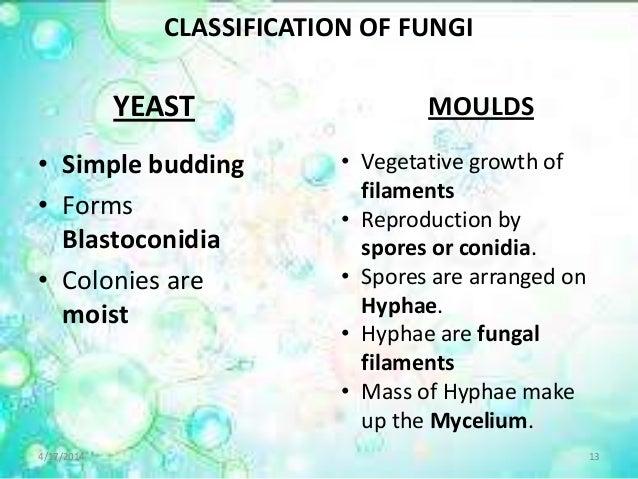 Candidiasis Moniliasis Oral Thrush Yeast Infections