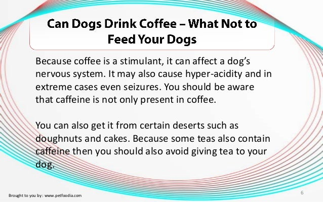 Can Dogs Drink Decaf