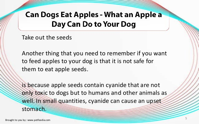 Is It Alright For Dogs To Eat Apples