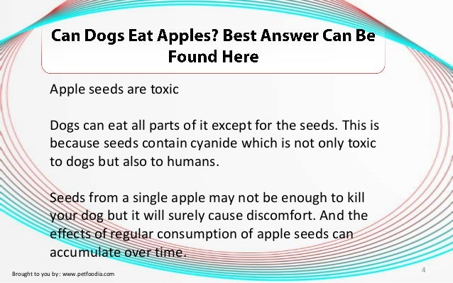 Can Dogs Eat Appled
