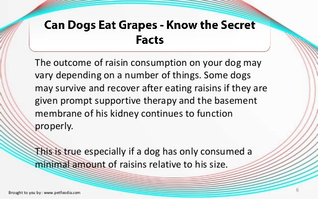 Can Dogs Recover From Eating Grapes