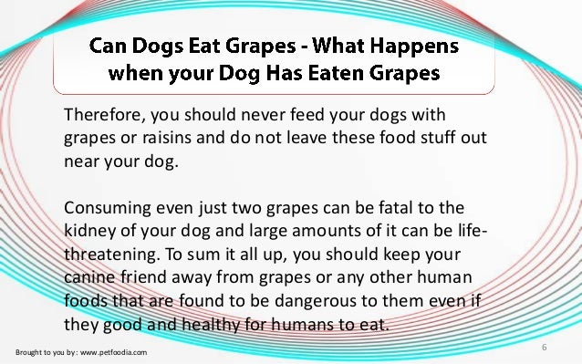 What Happens To A Dog If They Eat Raisins
