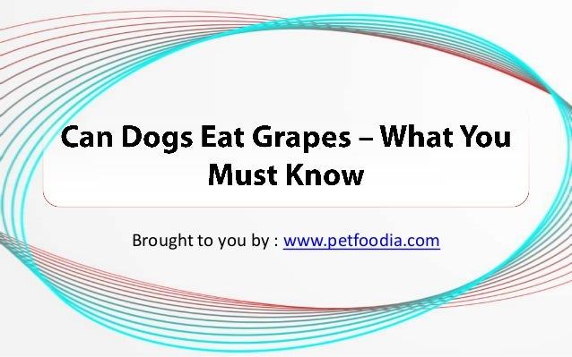 Why Can Dogs Not Eat Grapes