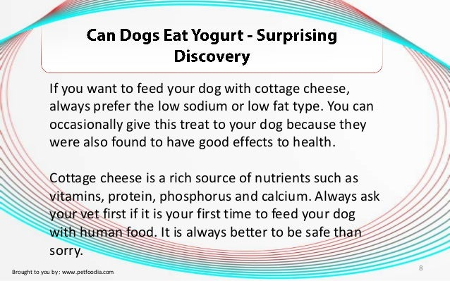 ... 8. If You Want To Feed Your Dog With Cottage Cheese ...