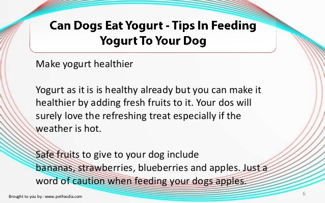 Can You Give Dogs Live Yogurt