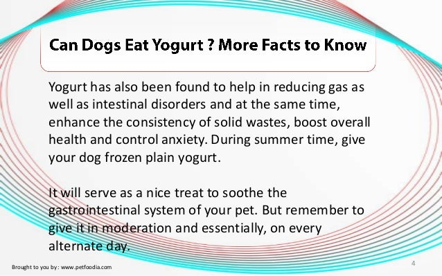 Can You Give Your Dog Natural Yogurt