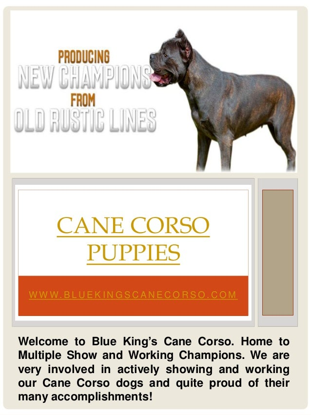 W W W. B L U E K I N G S C A N E C O R S O . C O M CANE CORSO PUPPIES Welcome to Blue King's Cane Corso. Home to Multiple ...