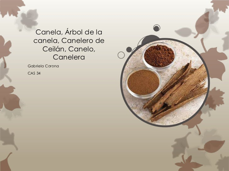 Canela, Árbol de la  canela, Canelero de    Ceilán, Canelo,       CaneleraGabriela CoronaCAS 34