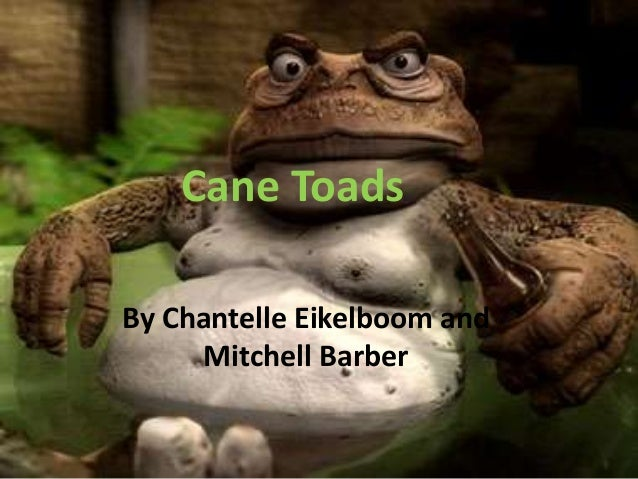 Cane Toads By Chantelle Eikelboom and Mitchell Barber