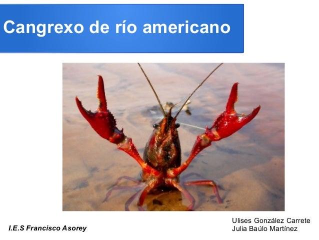 Cangrexo de río americanoI.E.S Francisco AsoreyUlises González CarreteJulia Baúlo Martínez
