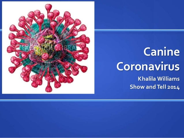 Image Result For Coronavirus Dogs