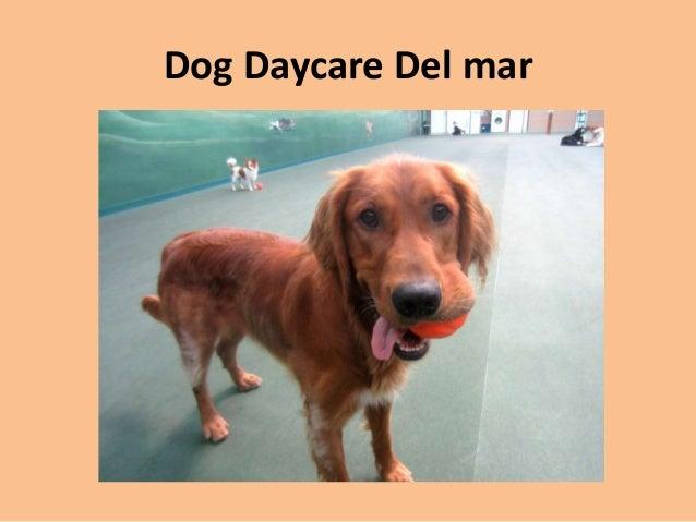 Dog Boarding Delmar De