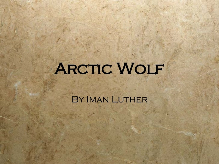 Arctic Wolf By Iman Luther