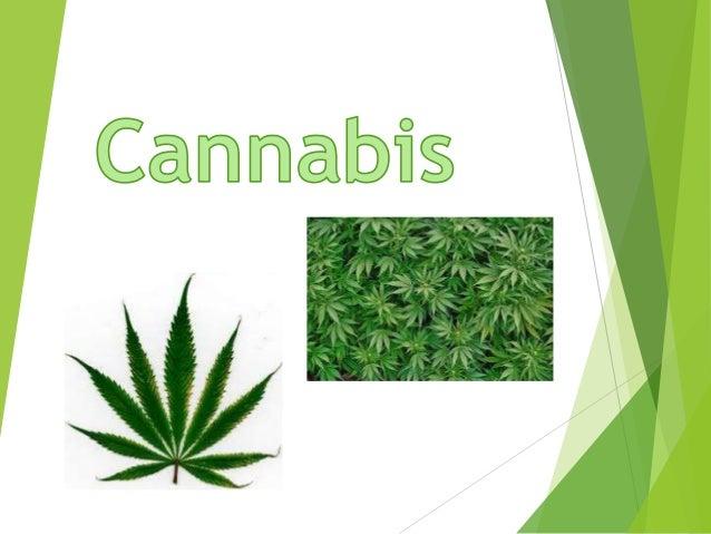Introdução Com este trabalho pretendemos ficar a saber o que é o cannabis, riscos do seu consumo, os seus efeitos.