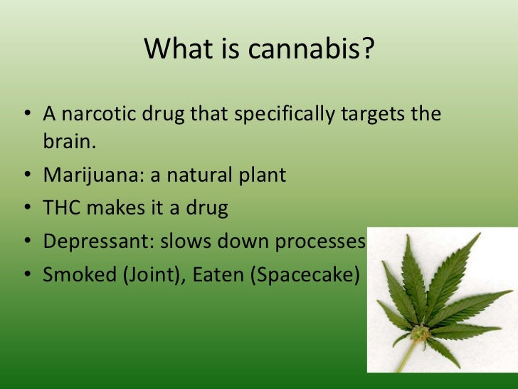 cannabis and teenagerscurrent dutch law; 3 what is cannabis?