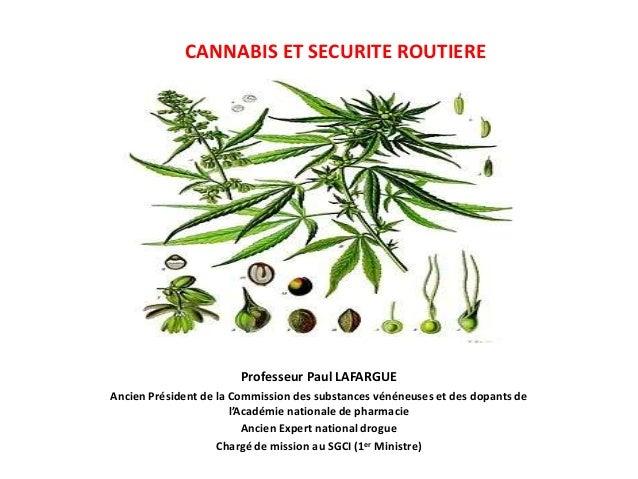CANNABIS ET SECURITE ROUTIERE  Professeur Paul LAFARGUE  Ancien Président de la Commission des substances vénéneuses et de...