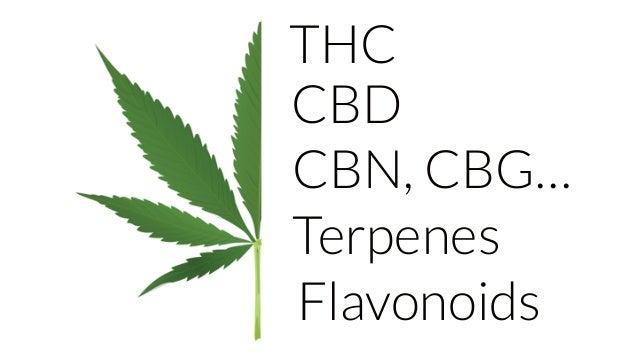 Meet Harmony - Cannabis Startups Europe