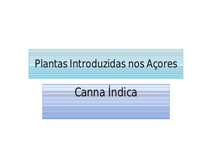 Plantas Introduzidas nos Açores        Canna Índica
