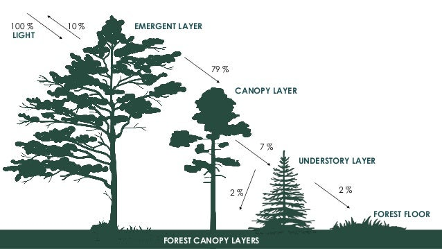 7. EMERGENT LAYER CANOPY ...  sc 1 st  SlideShare & Canopy management | Practices u0026 Information