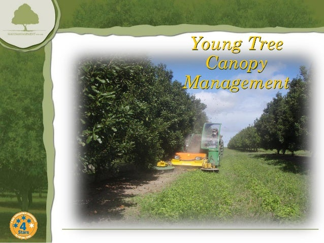Young Tree  CanopyManagement