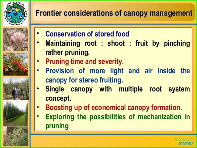Canopy Management In Fruits