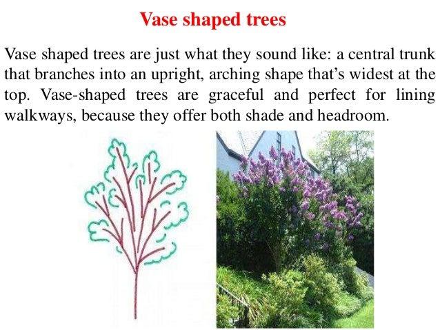 Canopy Types