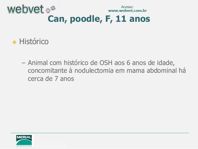 Can, poodle, F, 11 anos Histórico– Animal com histórico de OSH aos 6 anos de idade,concomitante à nodulectomia em mama ab...