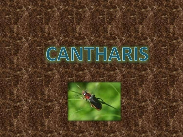 cantharis<br />