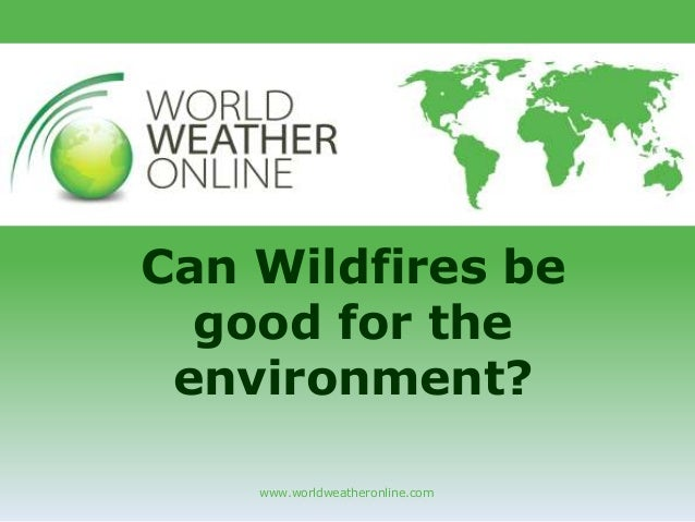 www.worldweatheronline.com Can Wildfires be good for the environment?