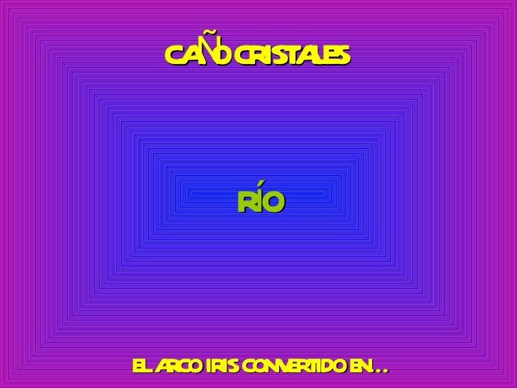 RíO EL ARCO IRIS CONVERTIDO EN… CAÑO CRISTALES